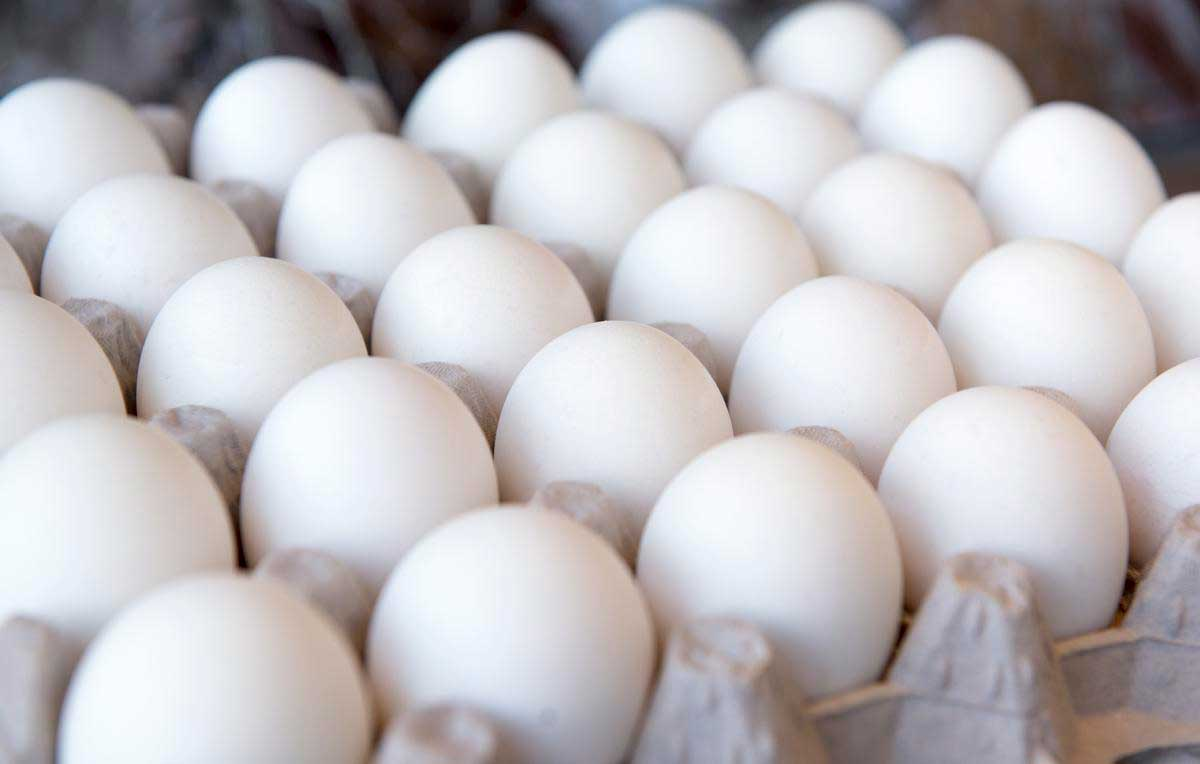 Egg shortage continues in Kuwait